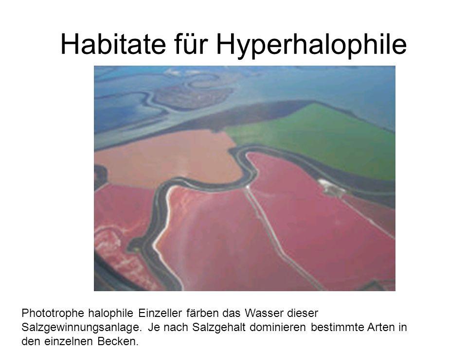 Habitate für Hyperhalophile