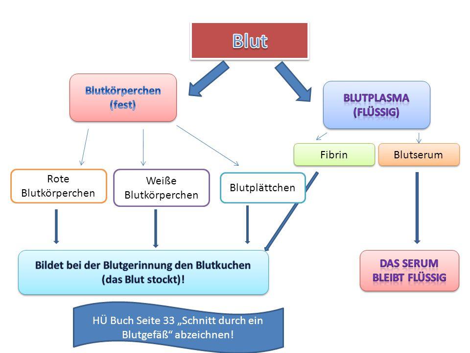 Blut Blutkörperchen (fest) Blutplasma (flüssig) Fibrin Blutserum