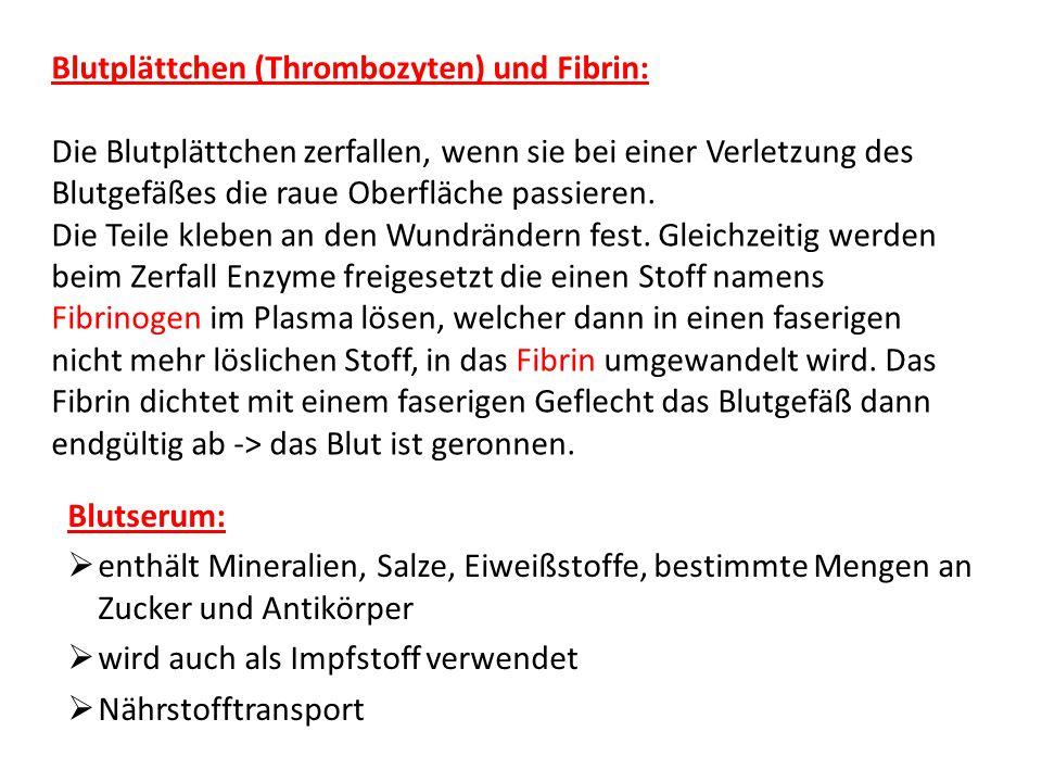 Blutplättchen (Thrombozyten) und Fibrin: