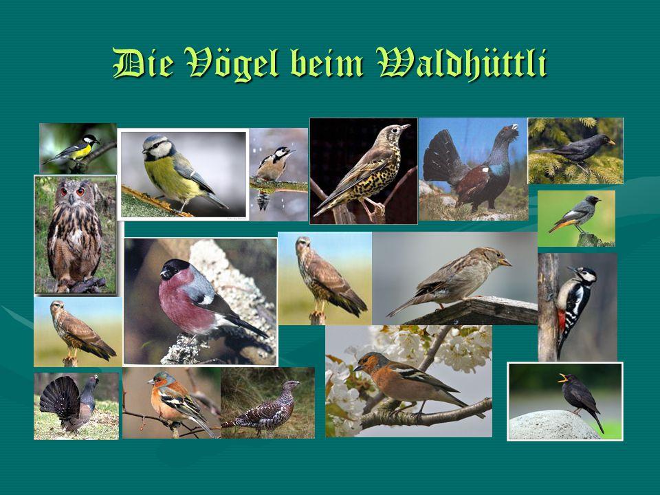 Die Vögel beim Waldhüttli
