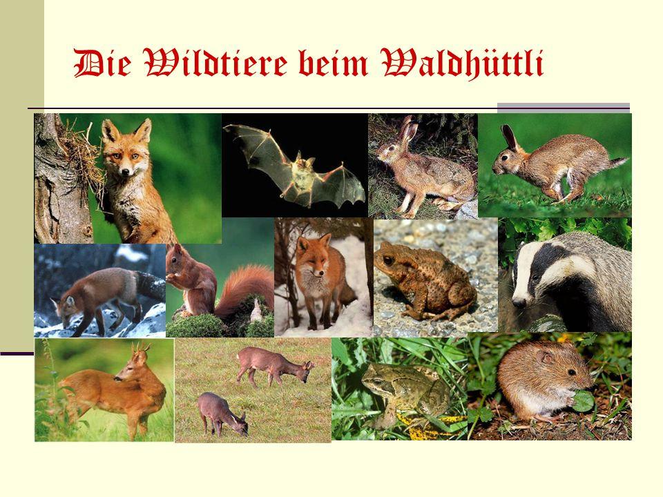 Die Wildtiere beim Waldhüttli