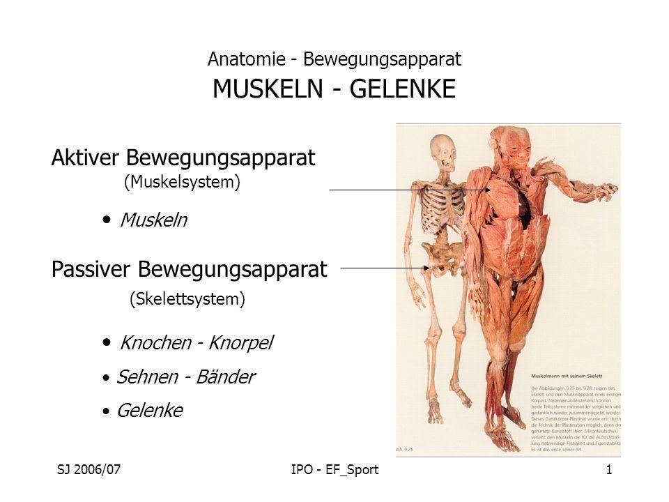 Anatomie - Bewegungsapparat MUSKELN - GELENKE