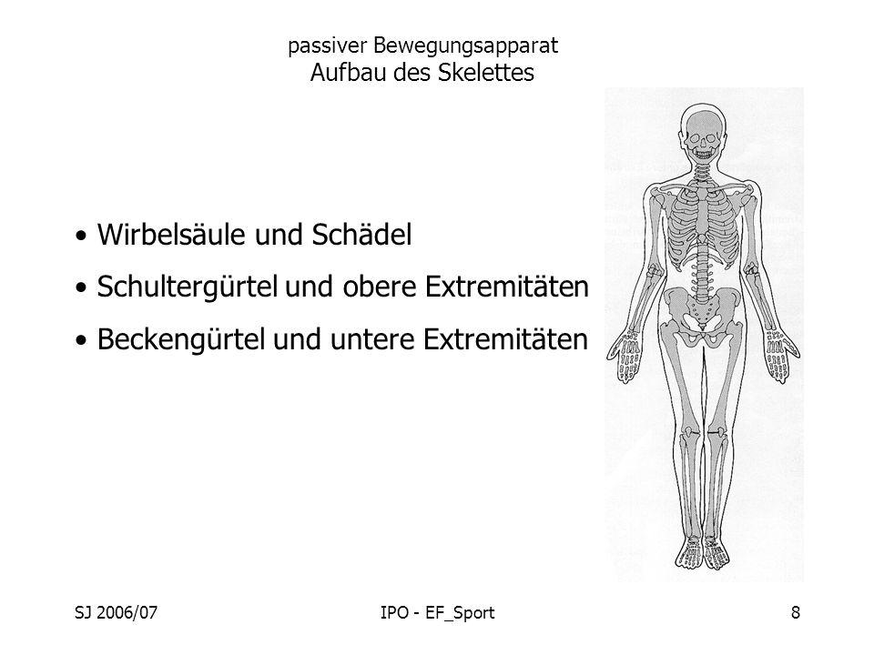 passiver Bewegungsapparat Aufbau des Skelettes