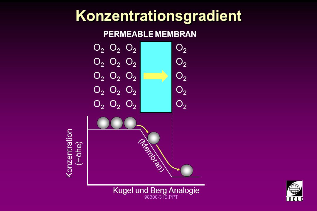Konzentrationsgradient