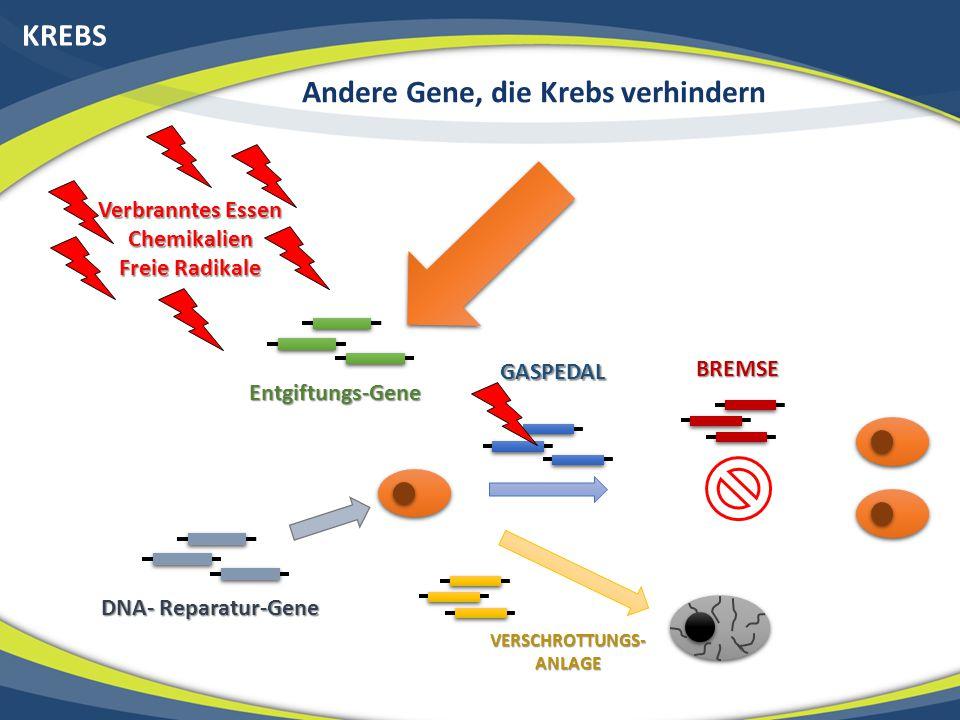 Andere Gene, die Krebs verhindern