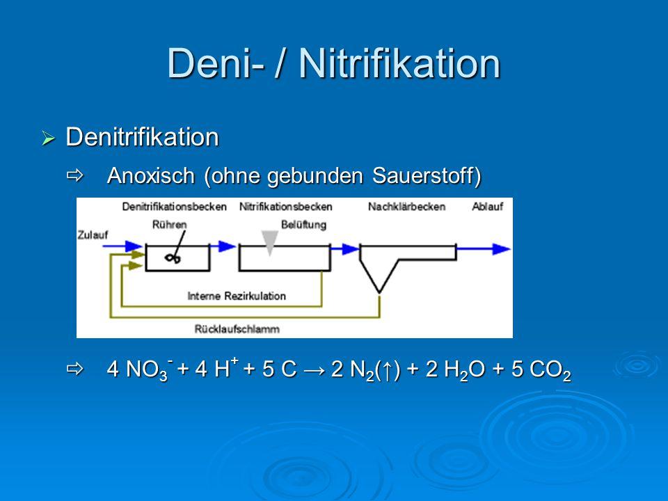 Deni- / Nitrifikation Denitrifikation
