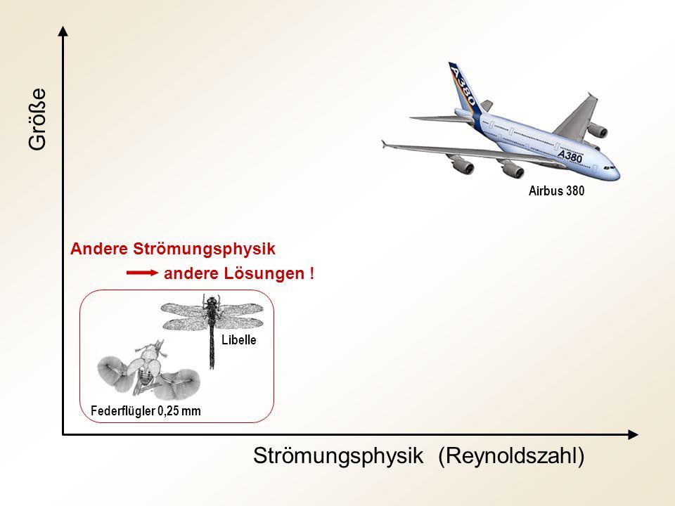 Strömungsphysik (Reynoldszahl)