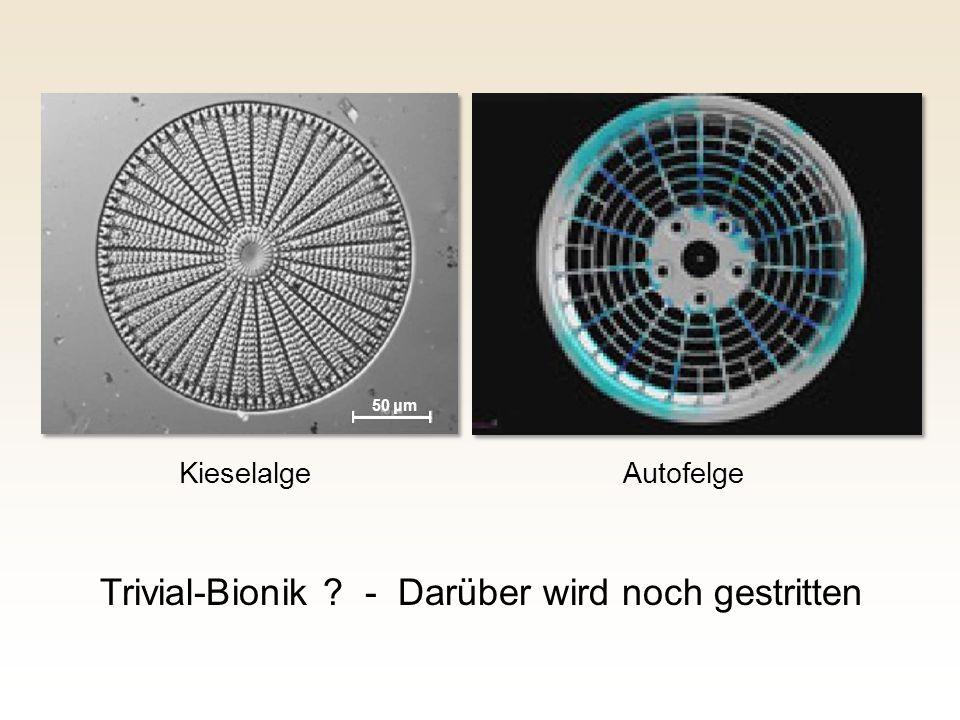 Trivial-Bionik - Darüber wird noch gestritten