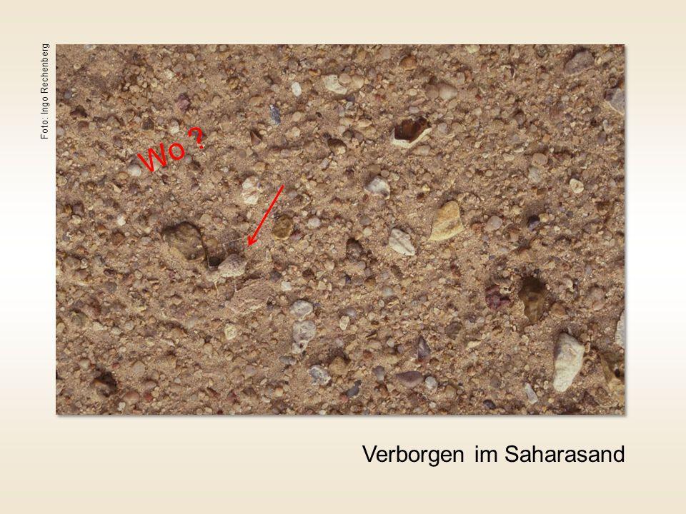 Foto: Ingo Rechenberg Wo Verborgen im Saharasand