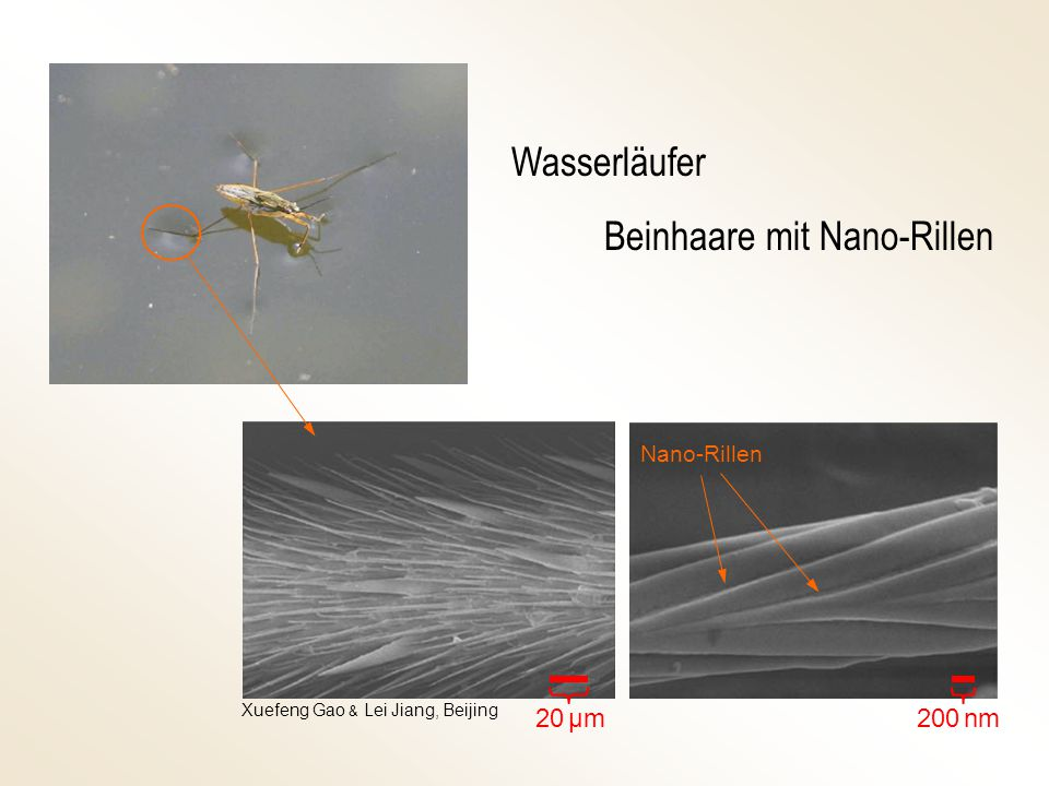 Beinhaare mit Nano-Rillen