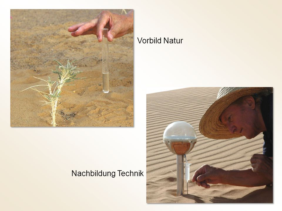 Vorbild Natur Nachbildung Technik
