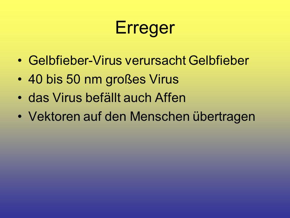 Erreger Gelbfieber-Virus verursacht Gelbfieber