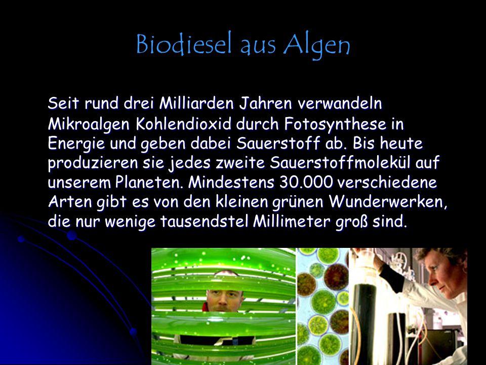 Biodiesel aus Algen