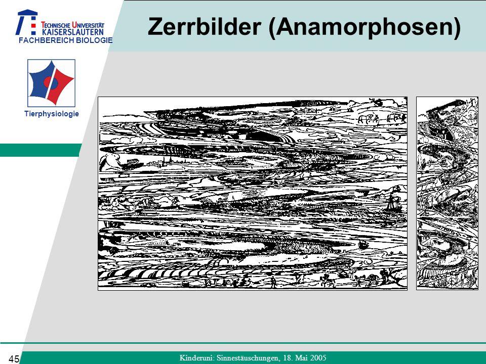 Zerrbilder (Anamorphosen)