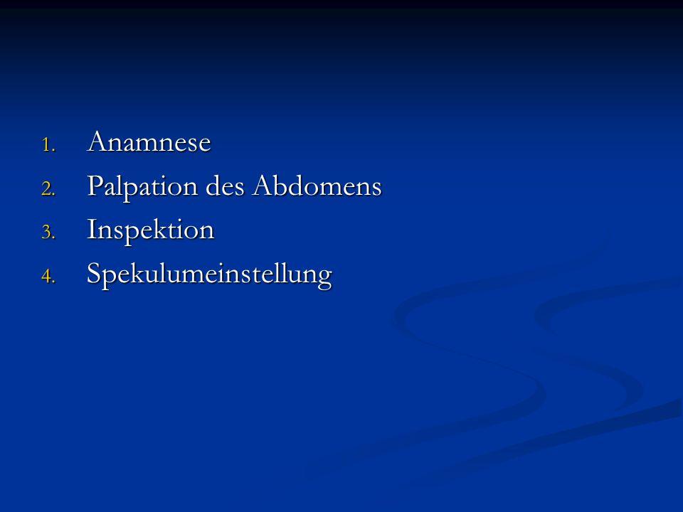 Anamnese Palpation des Abdomens Inspektion Spekulumeinstellung