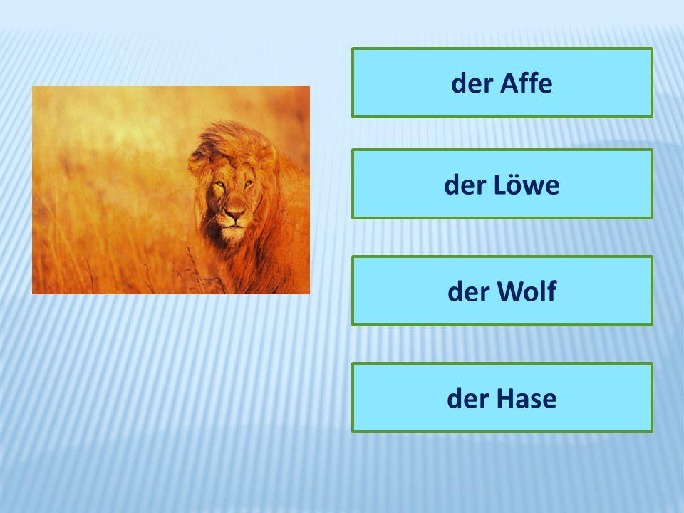 der Affe der Löwe der Wolf der Hase
