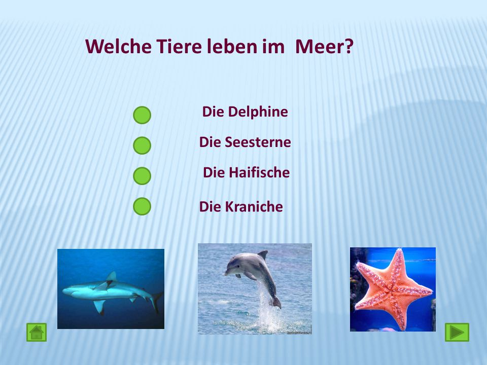 Welche Tiere leben im Meer