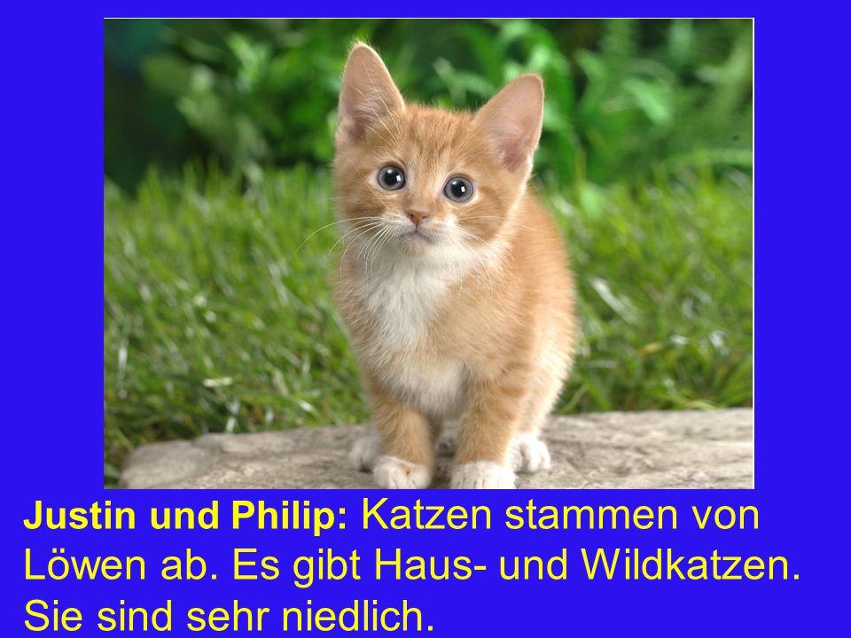 Justin und Philip: Katzen stammen von Löwen ab