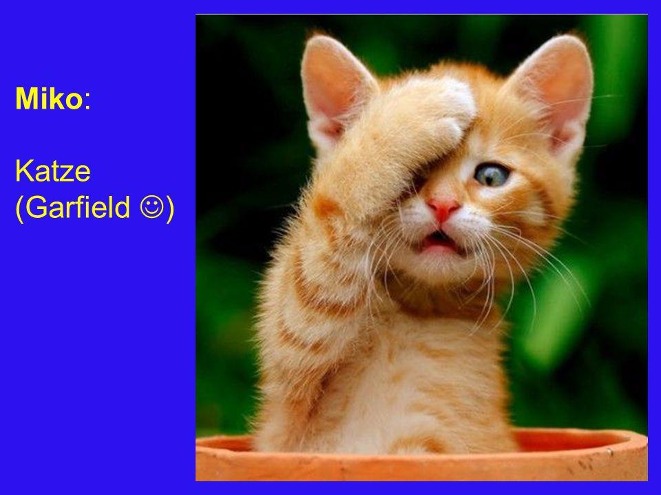 Miko: Katze (Garfield )