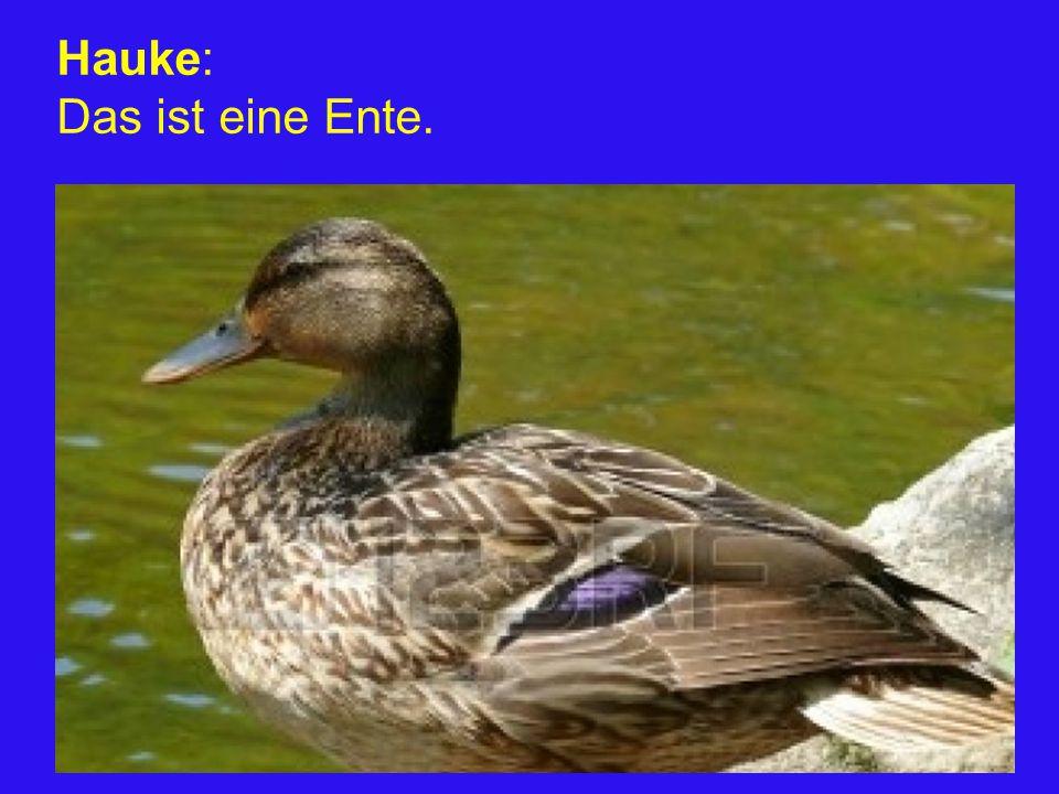 Hauke: Das ist eine Ente.