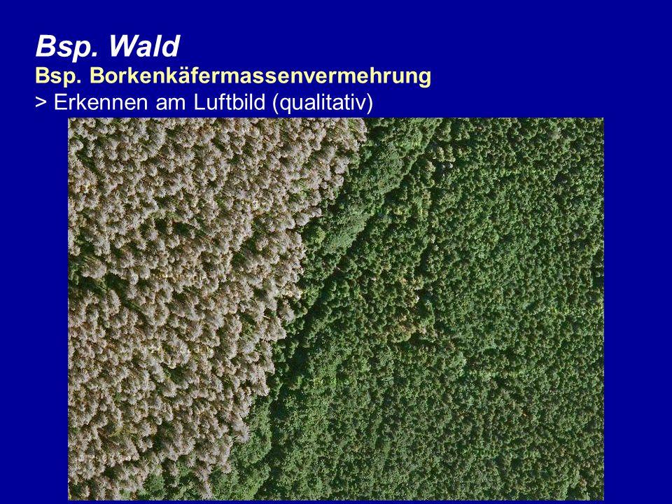 Bsp. Wald Bsp. Borkenkäfermassenvermehrung