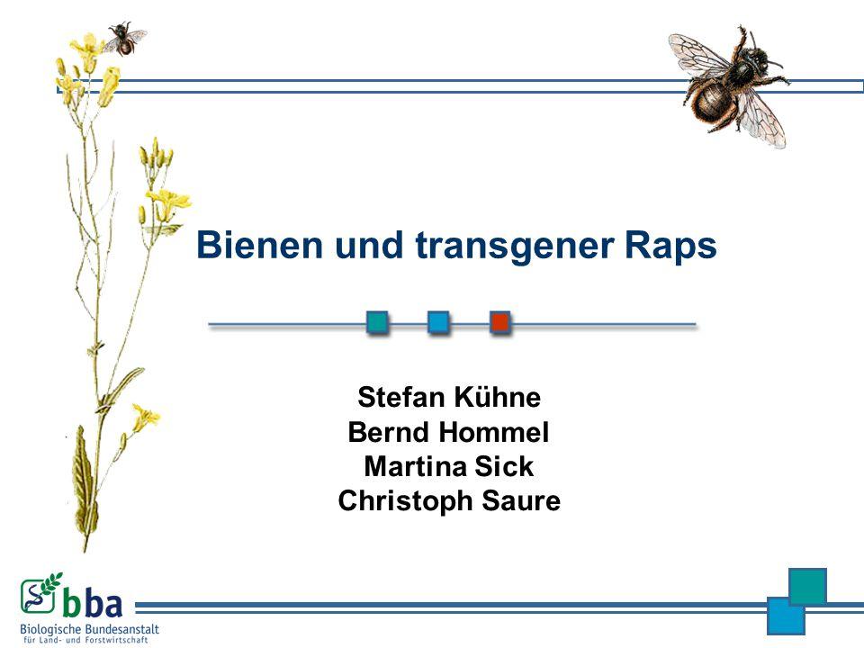 Bienen und transgener Raps