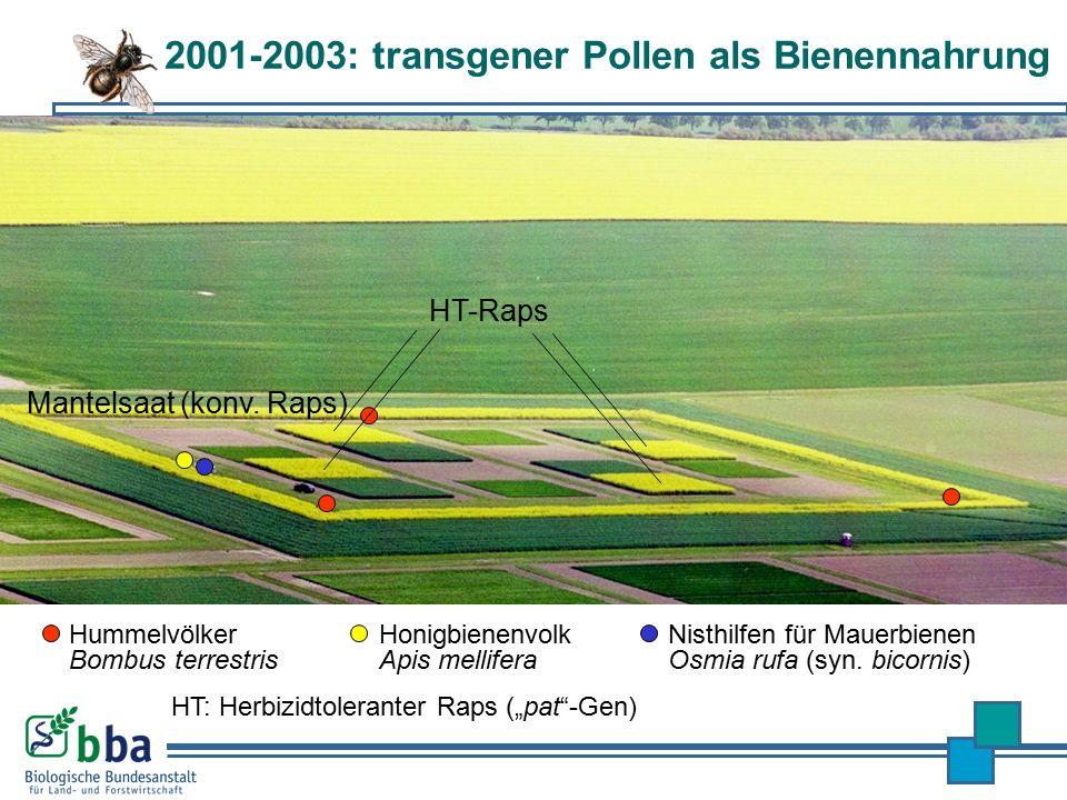 2001-2003: transgener Pollen als Bienennahrung