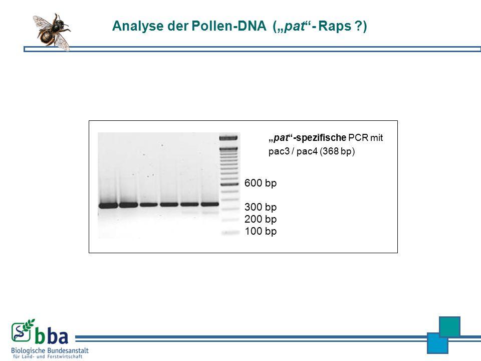 """Analyse der Pollen-DNA (""""pat - Raps )"""