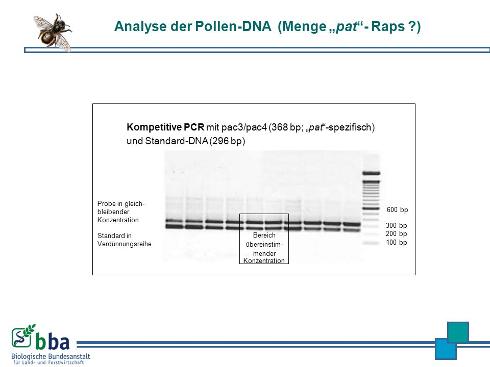 "Analyse der Pollen-DNA (Menge ""pat - Raps )"
