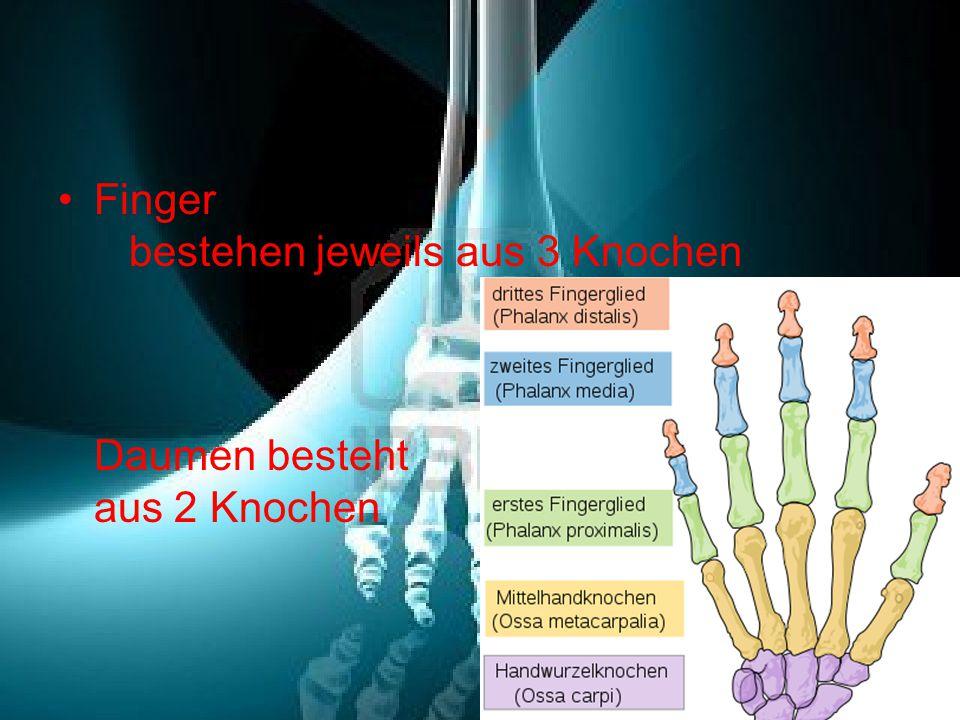 Finger bestehen jeweils aus 3 Knochen Daumen besteht aus 2 Knochen