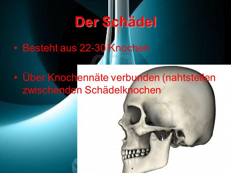 Niedlich Schädel Kennzeichnung Arbeitsblatt Bilder - Mathe ...