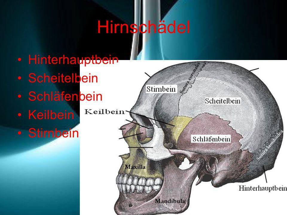 Hirnschädel Hinterhauptbein Scheitelbein Schläfenbein Keilbein