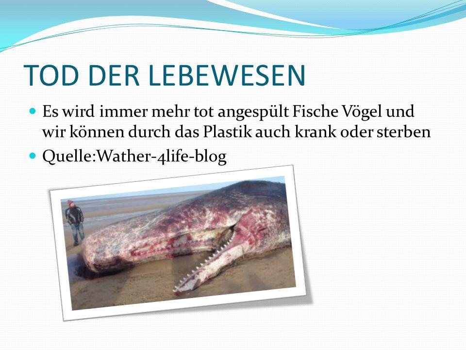 TOD DER LEBEWESEN Es wird immer mehr tot angespült Fische Vögel und wir können durch das Plastik auch krank oder sterben.