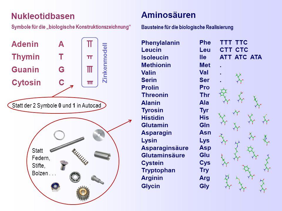 Aminosäuren Nukleotidbasen Adenin A Thymin T Guanin G Cytosin C