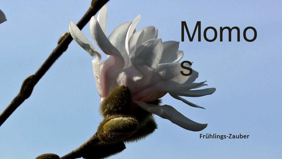 Momos Frühlings-Zauber