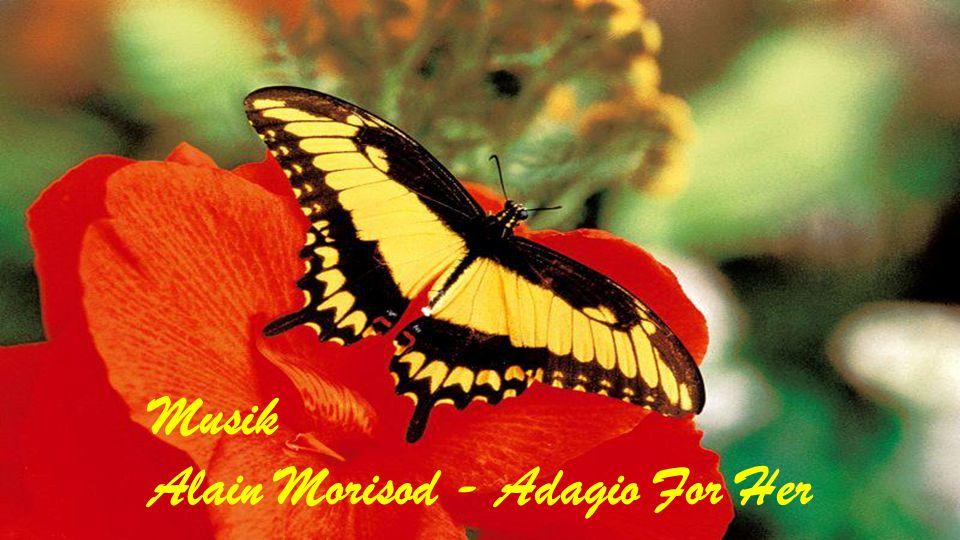 Musik Alain Morisod - Adagio For Her