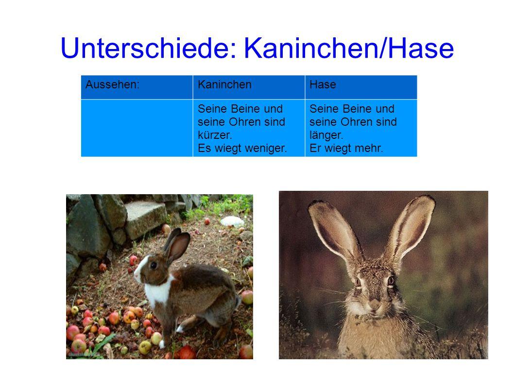Unterschiede: Kaninchen/Hase