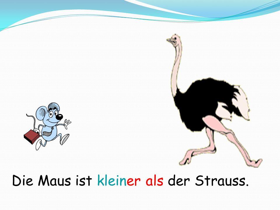 Die Maus ist kleiner als der Strauss.