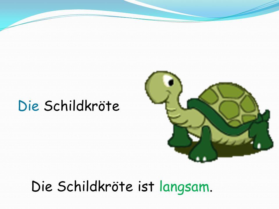 Die Schildkröte ist langsam.