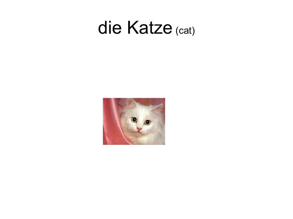 die Katze (cat)