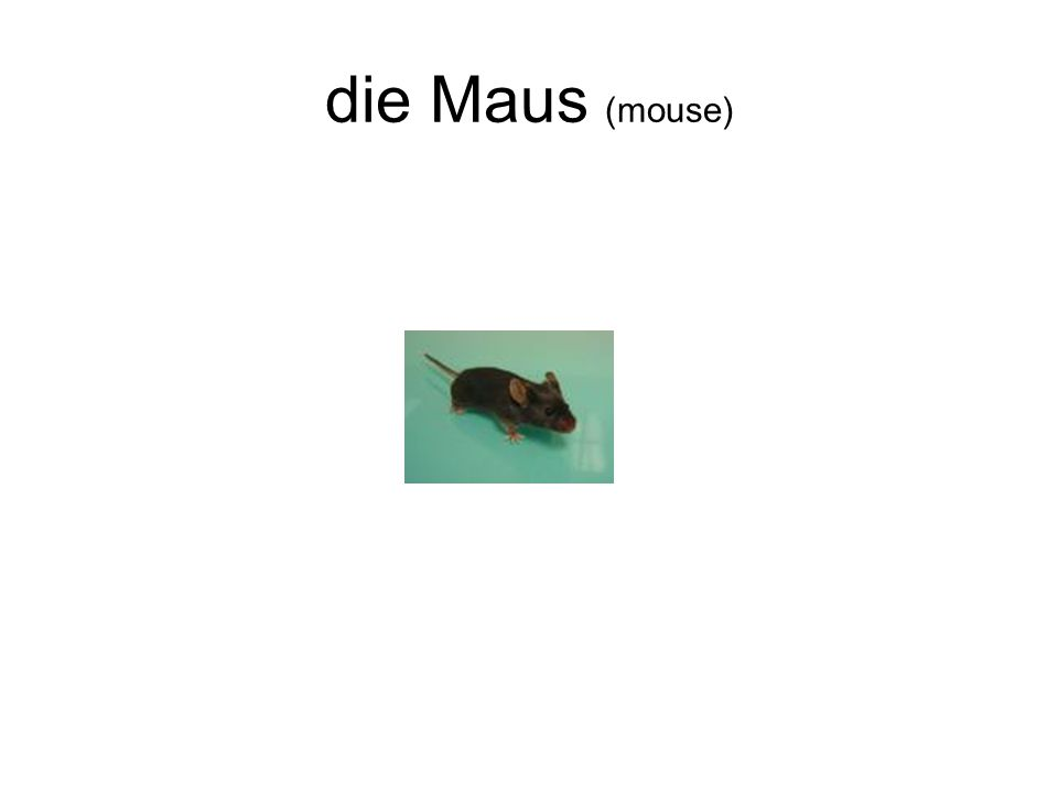 die Maus (mouse)