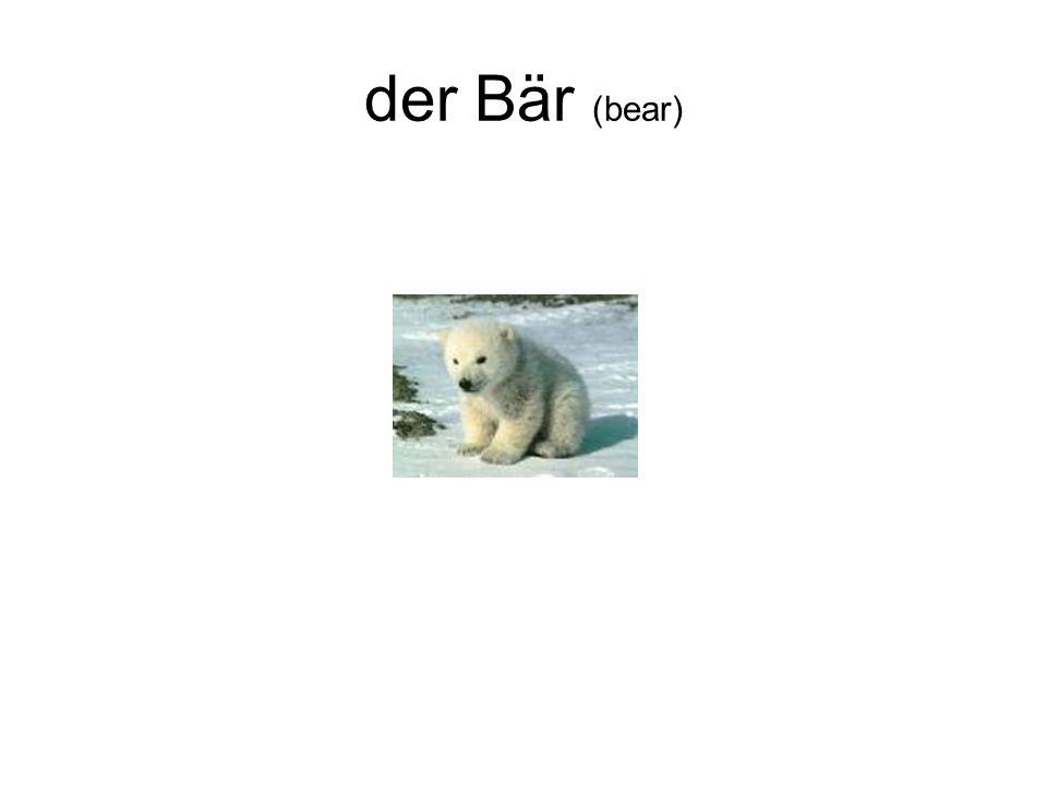 der Bär (bear)