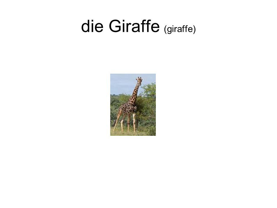 die Giraffe (giraffe)