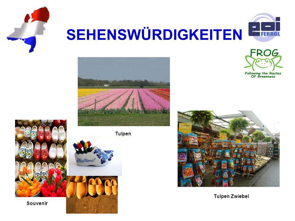 SEHENSWÜRDIGKEITEN Tulpen Tulpen Zwiebel Souvenir