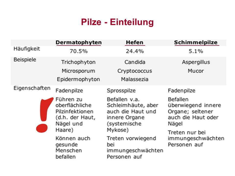 Pilze - Einteilung