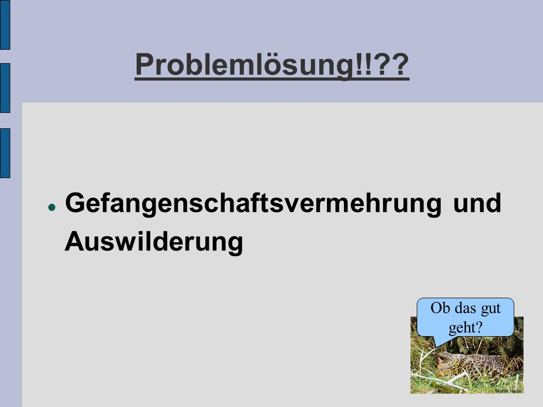 Problemlösung!! Gefangenschaftsvermehrung und Auswilderung