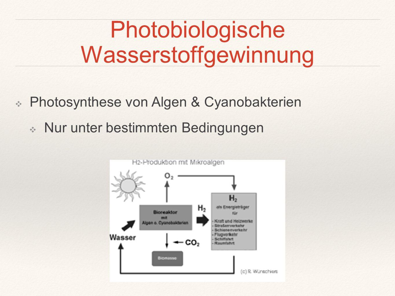 Photobiologische Wasserstoffgewinnung