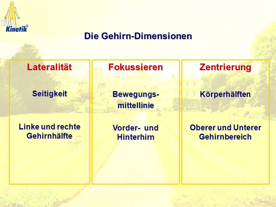 Die Gehirn-Dimensionen Linke und rechte Gehirnhälfte