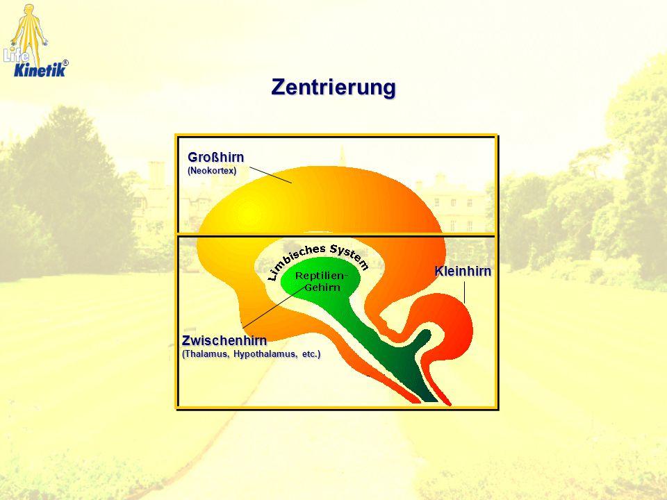 Zentrierung Großhirn Kleinhirn Zwischenhirn (Neokortex)