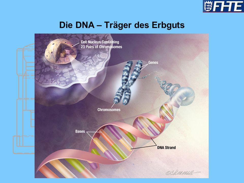 Die DNA – Träger des Erbguts